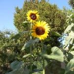 soleil nature et calme
