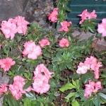 fleur de printemps soleil et lumière