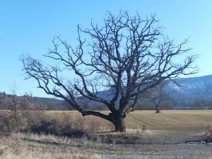aupres-de-mon-arbre
