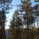 Beaumont dans le buech Hautes-Alpes